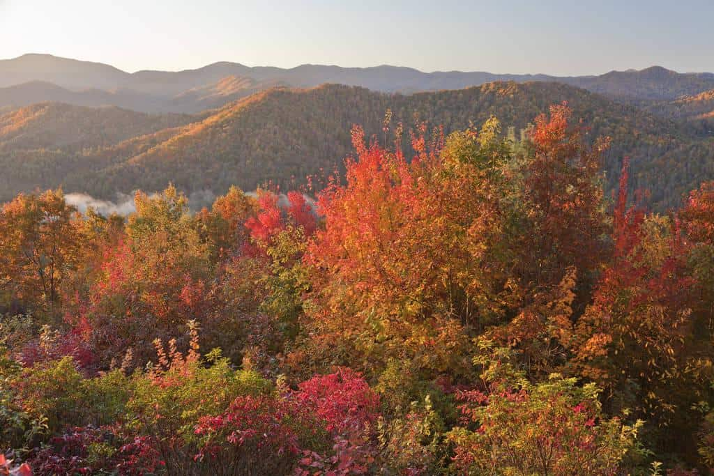 Smoky Mountain Fall Foliage