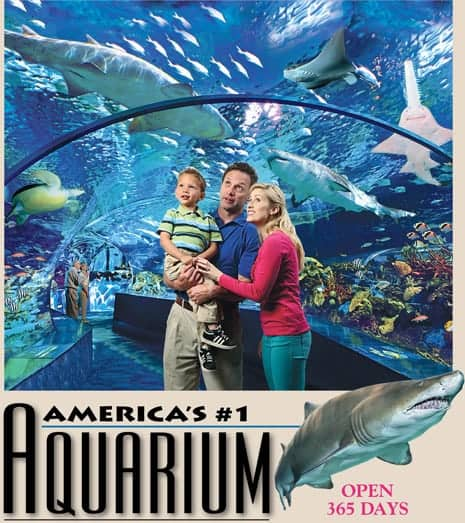 America's #1 Aquarium Open 365 Days