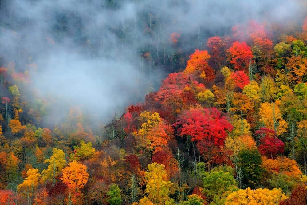 bright red yellow and orange leaves in the Smoky Mountains