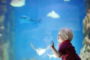 a toddler with his hands on the glass at Ripley's Aquarium of the Smokies