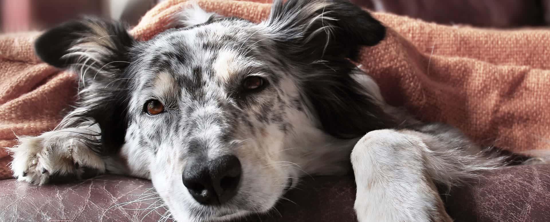 Pet Friendly Cabin Rentals in Gatlinburg TN